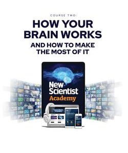New Scientist Academy: How your brain works and how to make the most of it